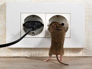 muis bestrijden