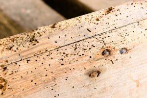 houtworm zelf bestrijden